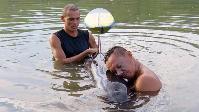 Surfistas salvam bebê baleia encalhado em missão que durou 6 horas 1