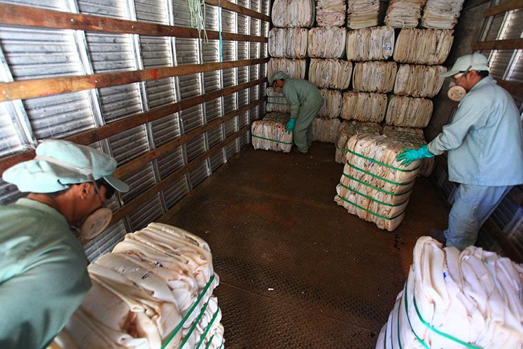 Brasil é referência mundial no descarte correto de embalagens de defensivos agrícolas 3