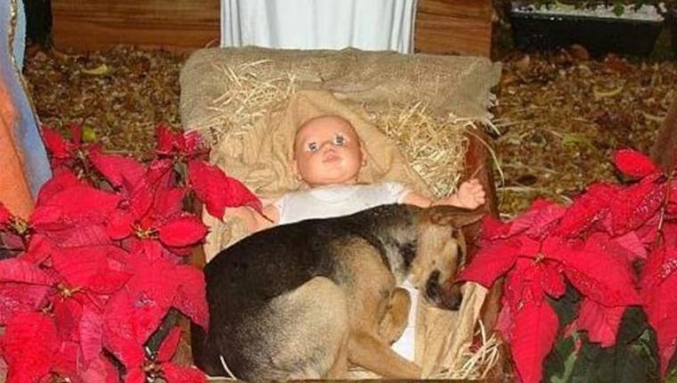 Cão abandonado se conforta dentro de presépio em Criciúma (SC) e comove público que o adota 2