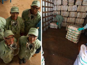 Brasil é referência mundial no descarte correto de embalagens de defensivos agrícolas 1