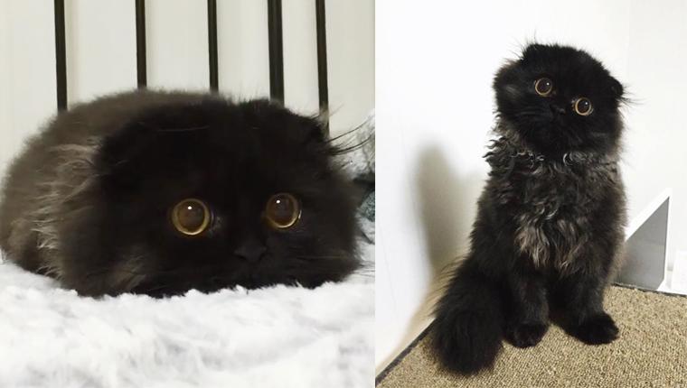 Este adorável gatinho tem olhos hipnotizantes como o de uma coruja 1