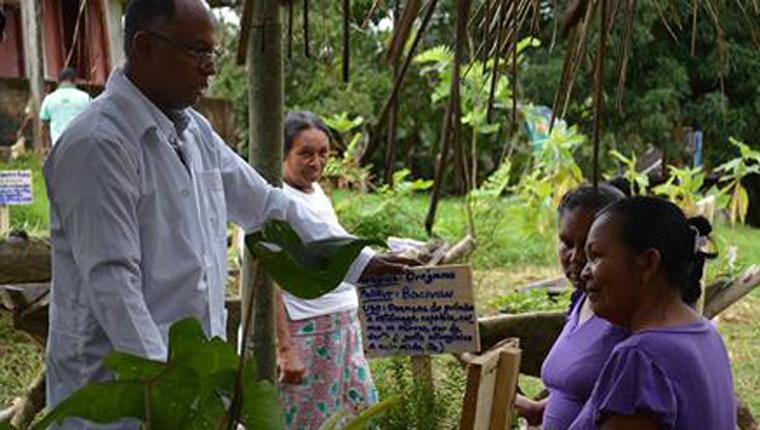 Médico cubano cria horta para índios brasileiros resgatarem o uso de plantas medicinais 1