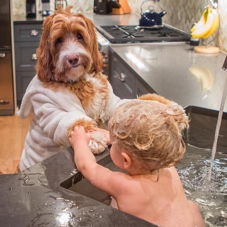 reagandoodle-dog-and-boy-7
