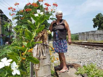 Senhora revitaliza área abandonada e a transforma em jardim de flores e árvores frutíferas no Rio 3