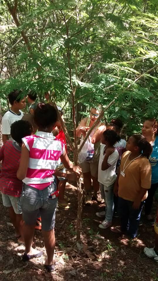 Viúva de vítima de acidente aéreo utiliza indenização para criar um parque de reflorestamento 3