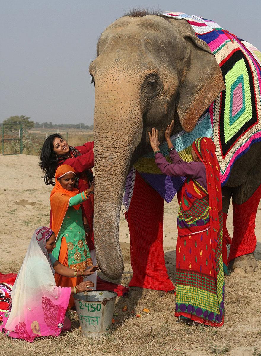 Voluntários tricotam suéteres para proteger do frio elefantes resgatados 2