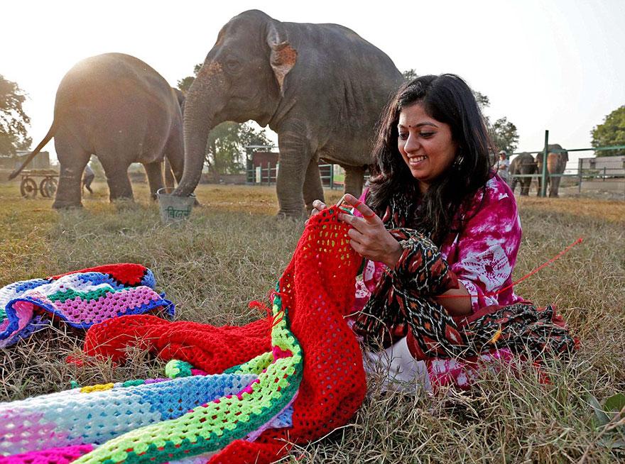 Voluntários tricotam suéteres para proteger do frio elefantes resgatados 1