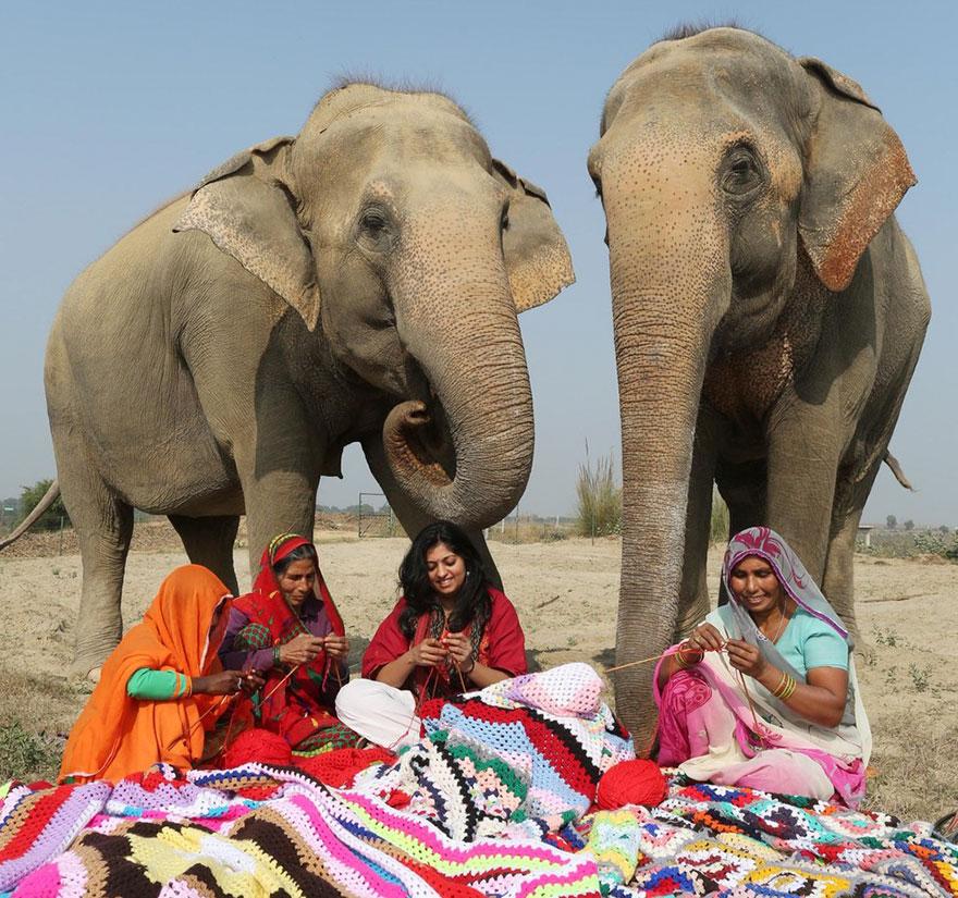 Voluntários tricotam suéteres para proteger do frio elefantes resgatados 3