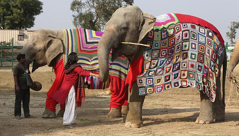 suéteres elefante índia