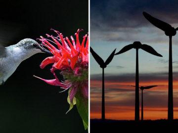 Turbina eólica em forma de beija flor gera energia limpa