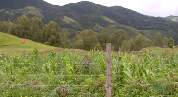 Conheça barraquinha de produtos orgânicos sem vendedor em Delfim Moreira (MG) 5