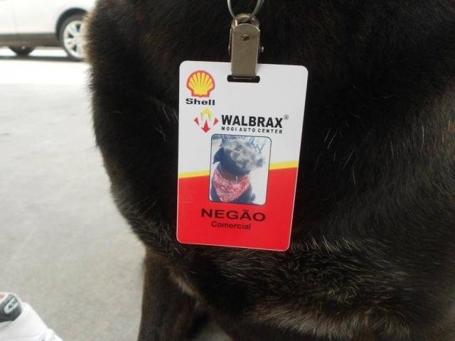 Negão foi adotado e virou 'funcionário exemplar' de posto