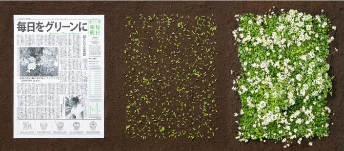 Plante este jornal japonês que ele irá florescer 3