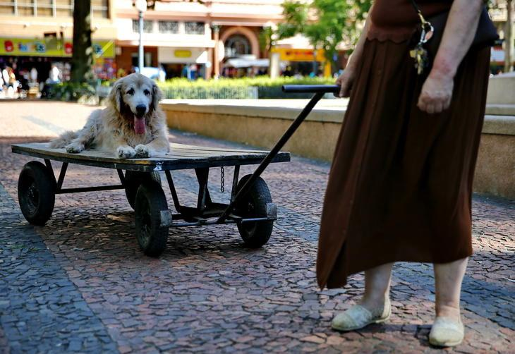 Professora usa carrinho para passear com seu cão idoso 2