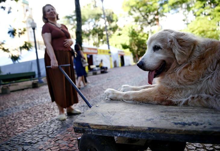 Professora usa carrinho para passear com seu cão idoso 4