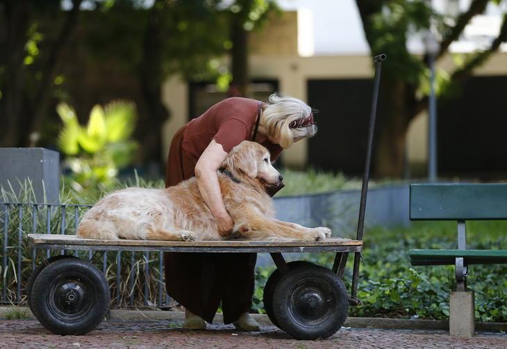 Professora usa carrinho para passear com seu cão idoso 3