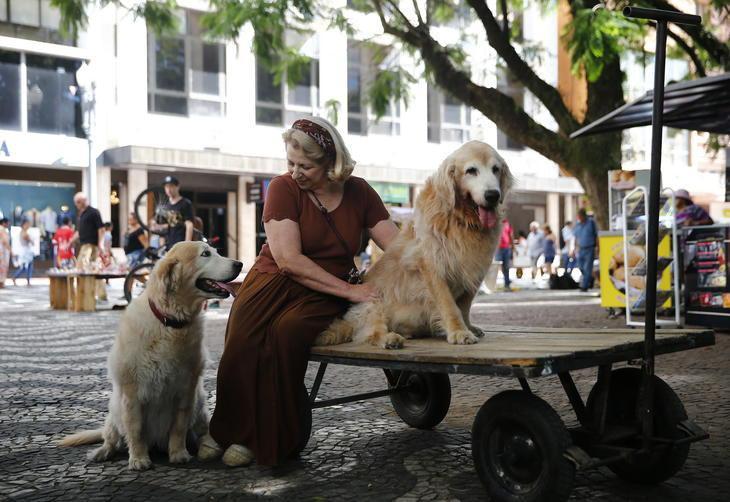 Professora usa carrinho para passear com seu cão idoso 6