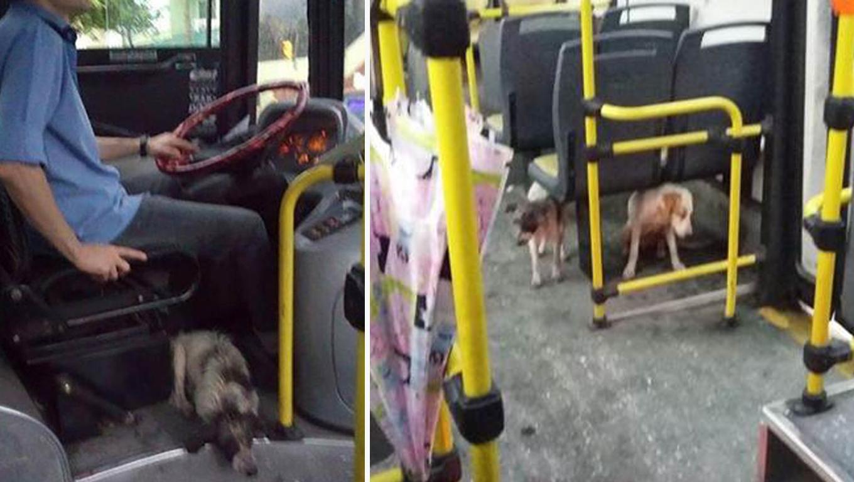 Cães assustados ganham 'carona' de motorista de ônibus durante temporal 1