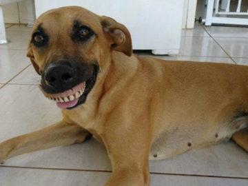 dentadura tem feito muito sucesso