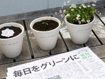 Plante este jornal japonês que ele irá florescer