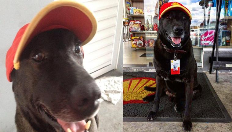cão Negão virou funcionário exemplar