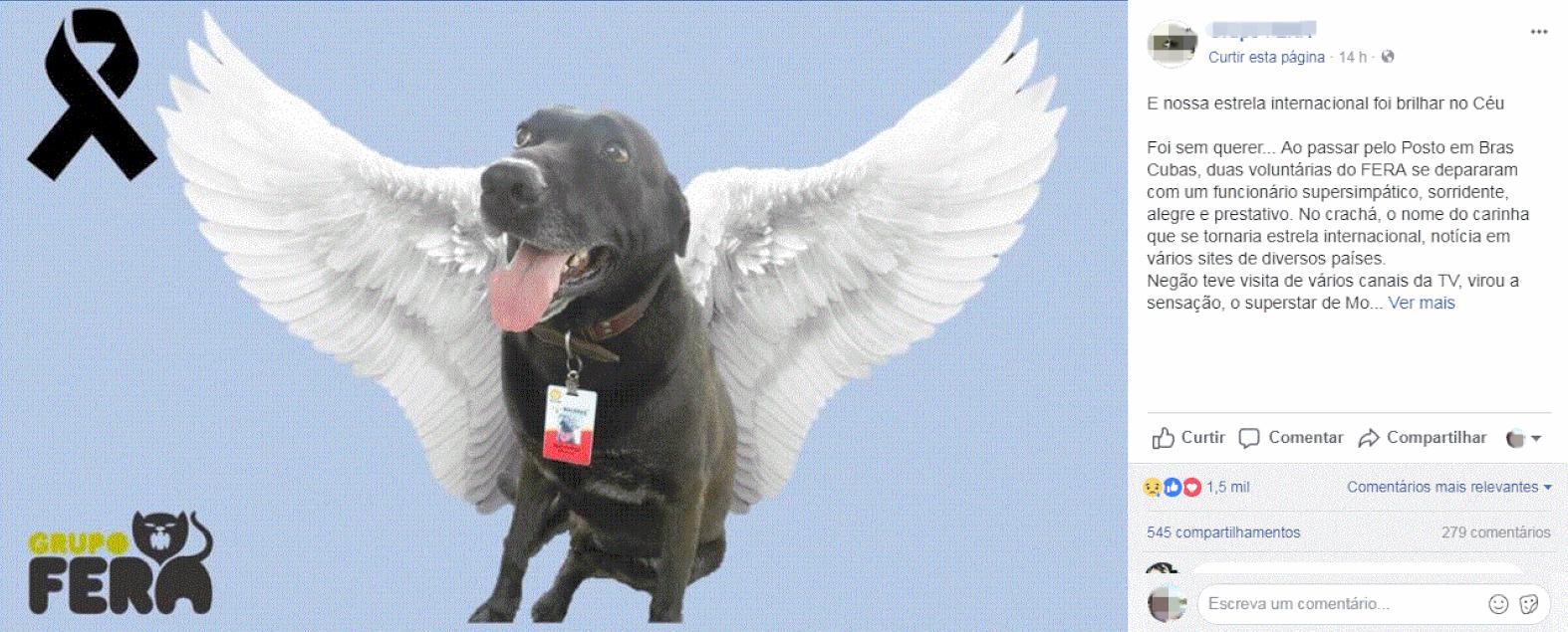 O cão Negão foi adotado e virou 'funcionário exemplar' de posto de gasolina em Mogi 1