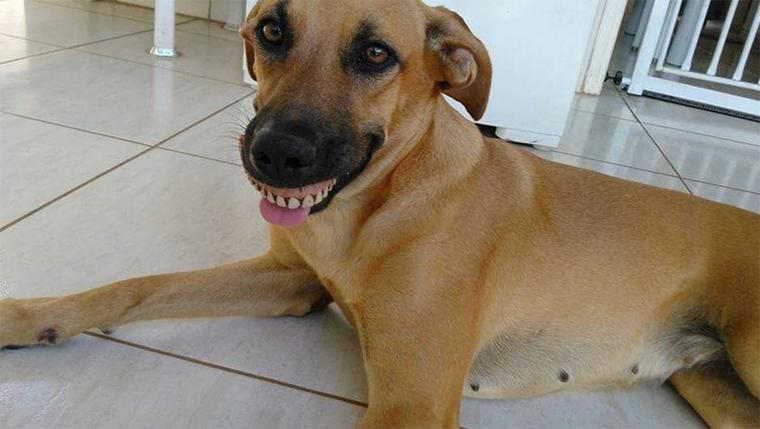 Vira-lata 'usa' dentadura encontrada no quintal