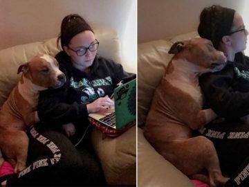 pit bull não para de abraça-la