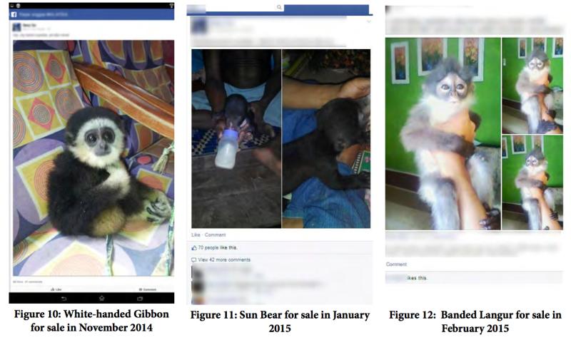 venda de animais foi proibida dentro do facebook