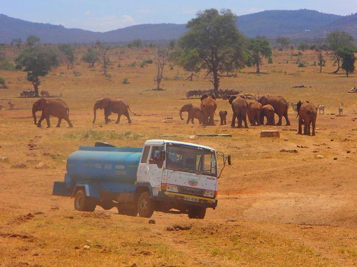 Homem viaja todos os dias para matar a sede de animais 2