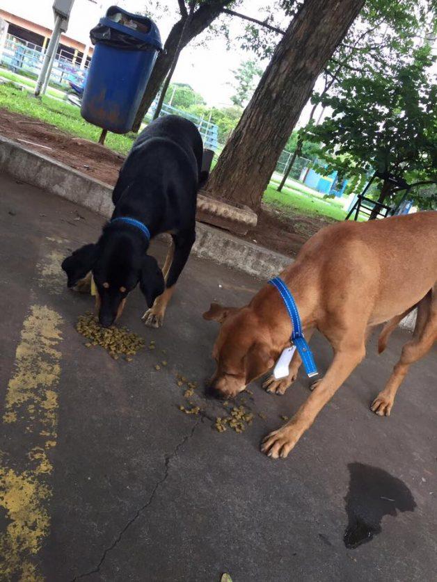 """No RS, posto de gasolina """"contrata"""" três cães de rua que viviam no local 2"""