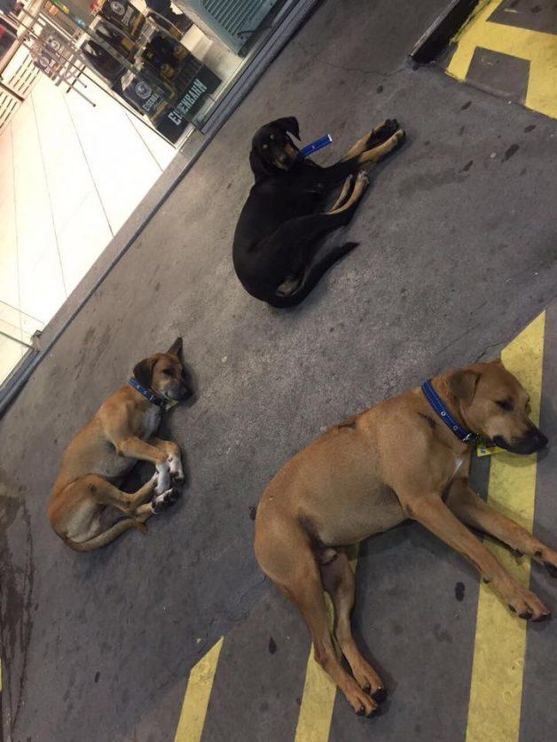 """No RS, posto de gasolina """"contrata"""" três cães de rua que viviam no local 4"""