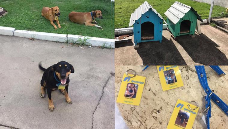 posto contrata cães