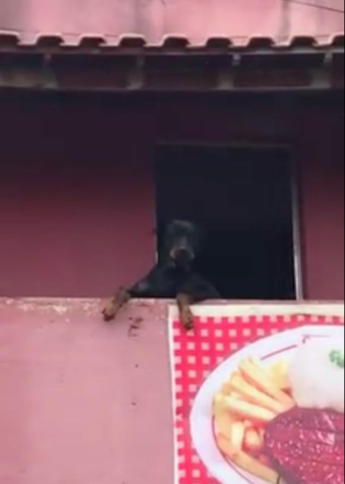 cão ficou vendo a serenata