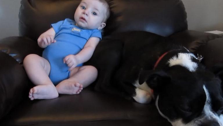 bebê pum