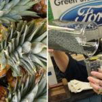 De frutas a chicletes: Ford recicla diversos materiais para serem aplicados nos carros 1