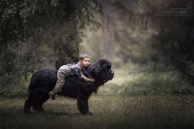 cachorros enormes huge dogs and kids