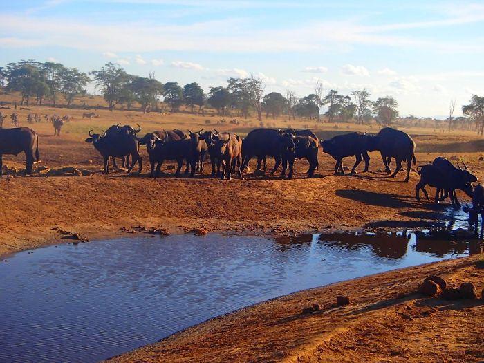 Homem viaja todos os dias para matar a sede de animais 4