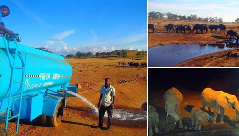 ele leva água para animais com sede
