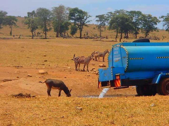Homem viaja todos os dias para matar a sede de animais 5