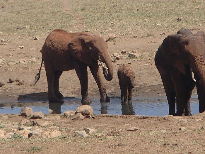 Homem viaja todos os dias para matar a sede de animais 6