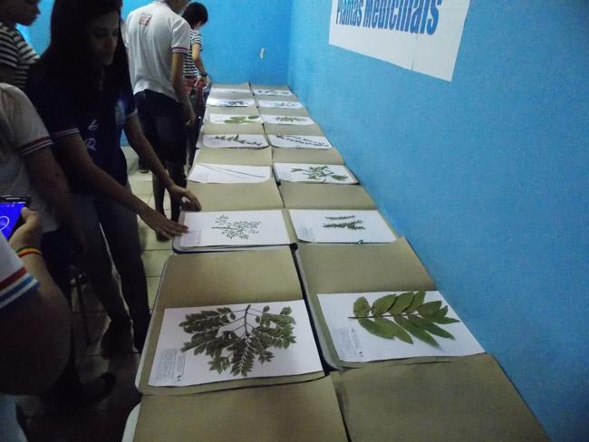 plantas medicinais catalogadas