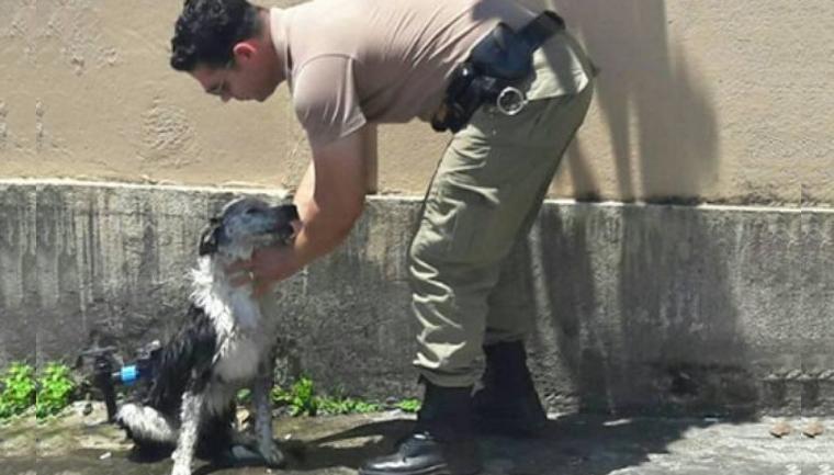 Policial deu banho de mangueira em cachorro para reanimá-lo Fonte: Canal do Pet - iG @ http://canaldopet.ig.com.br/curiosidades/especiais/2016-12-28/cachorro-calor-mangueira.html?utm_source=social-ig&utm_campaign=facebook-ig&utm_medium=2016-12-28-cachorro-calor-mangueira devido o calor