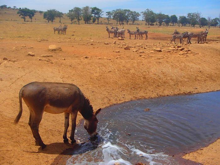 Homem viaja todos os dias para matar a sede de animais 8