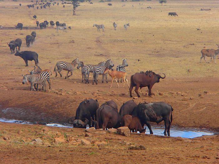 Homem viaja todos os dias para matar a sede de animais 11