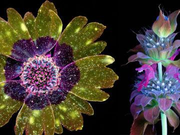 luzes invisíveis de flores