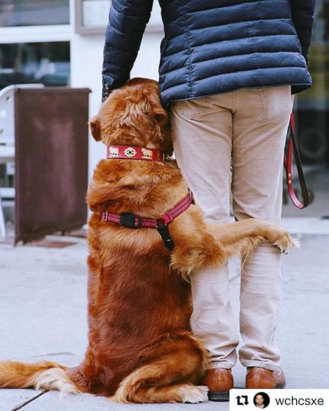 Cão distribui abraços e alivia estresse de pessoas nas ruas de Nova York 2