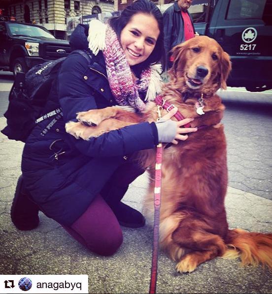 Cão distribui abraços e alivia estresse de pessoas nas ruas de Nova York 4