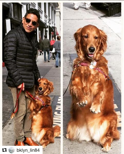 Cão distribui abraços e alivia estresse de pessoas nas ruas de Nova York 5