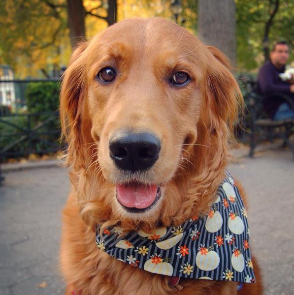 Cão distribui abraços e alivia estresse de pessoas nas ruas de Nova York 6